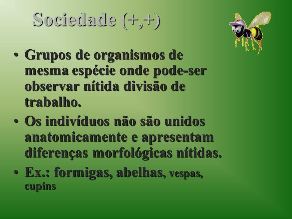 Sociedade (+,+)Grupos de organismos de mesma espécie onde pode-ser observar nítida divisão de trabalho.