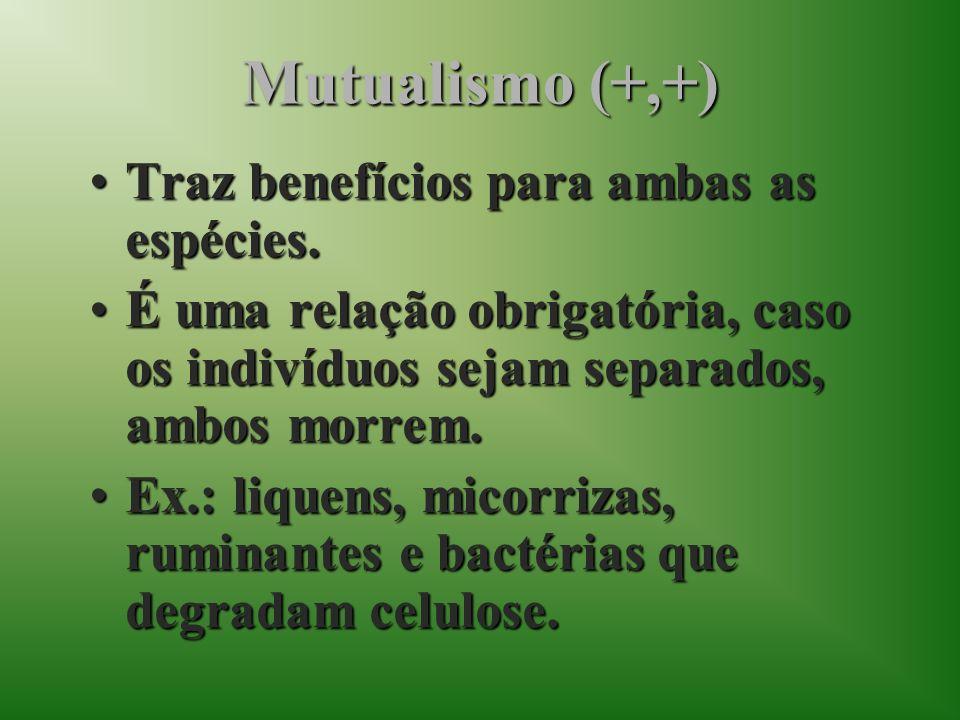 Mutualismo (+,+) Traz benefícios para ambas as espécies.