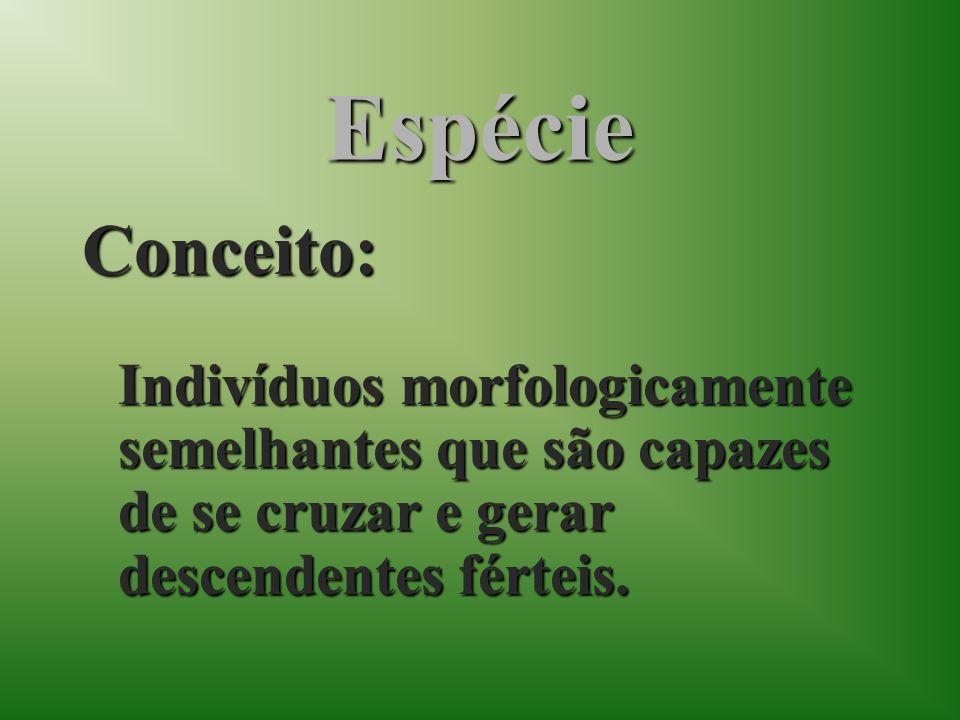 EspécieConceito: Indivíduos morfologicamente semelhantes que são capazes de se cruzar e gerar descendentes férteis.