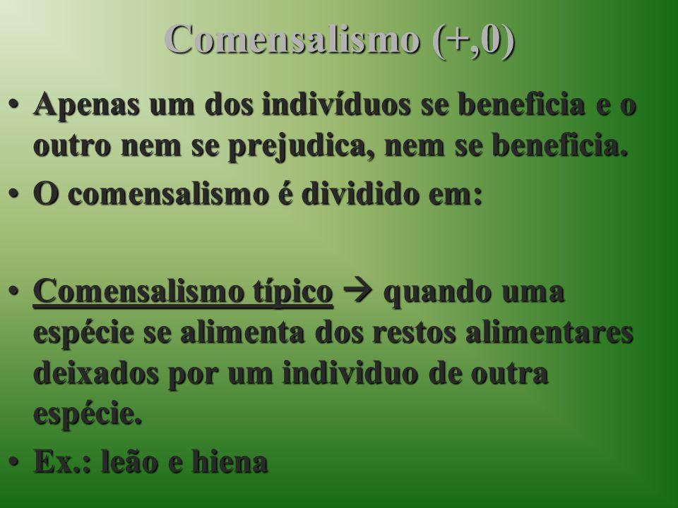 Comensalismo (+,0)Apenas um dos indivíduos se beneficia e o outro nem se prejudica, nem se beneficia.