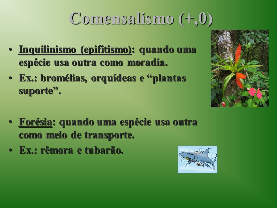 Comensalismo (+,0)Inquilinismo (epifitismo): quando uma espécie usa outra como moradia. Ex.: bromélias, orquídeas e plantas suporte .