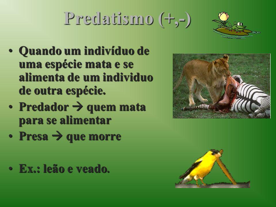 Predatismo (+,-)Quando um indivíduo de uma espécie mata e se alimenta de um individuo de outra espécie.