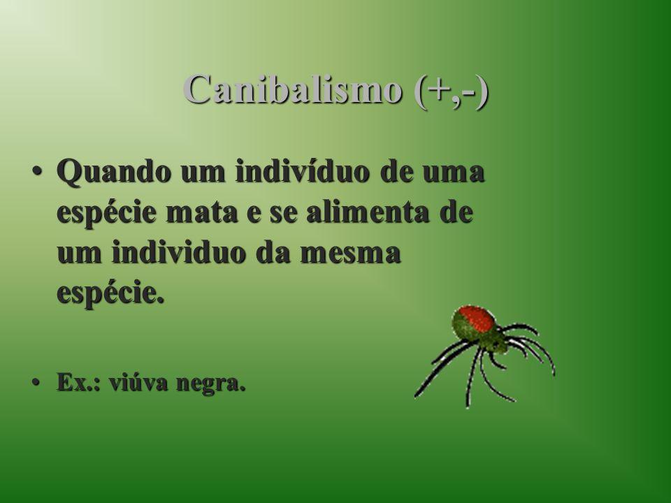 Canibalismo (+,-)Quando um indivíduo de uma espécie mata e se alimenta de um individuo da mesma espécie.