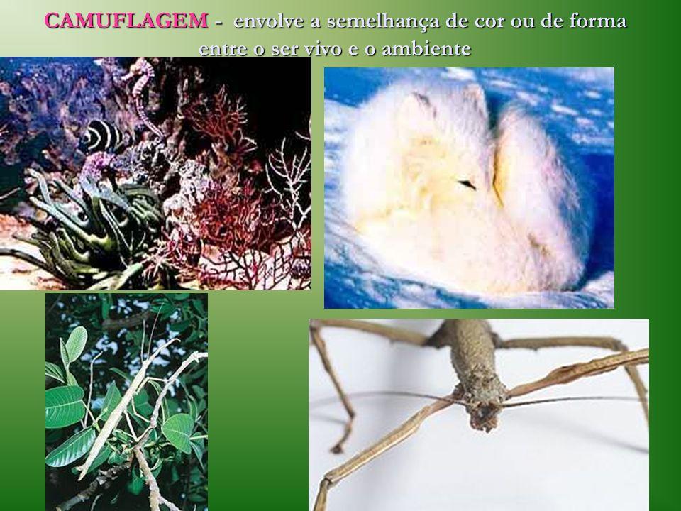 CAMUFLAGEM - envolve a semelhança de cor ou de forma entre o ser vivo e o ambiente
