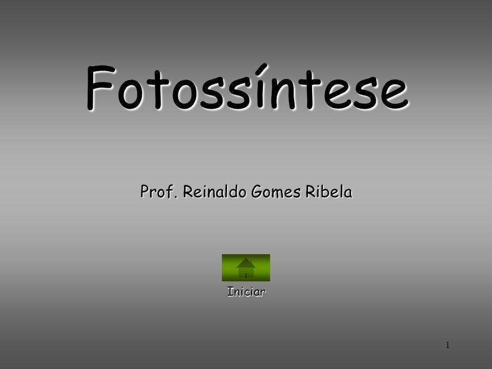 Prof. Reinaldo Gomes Ribela