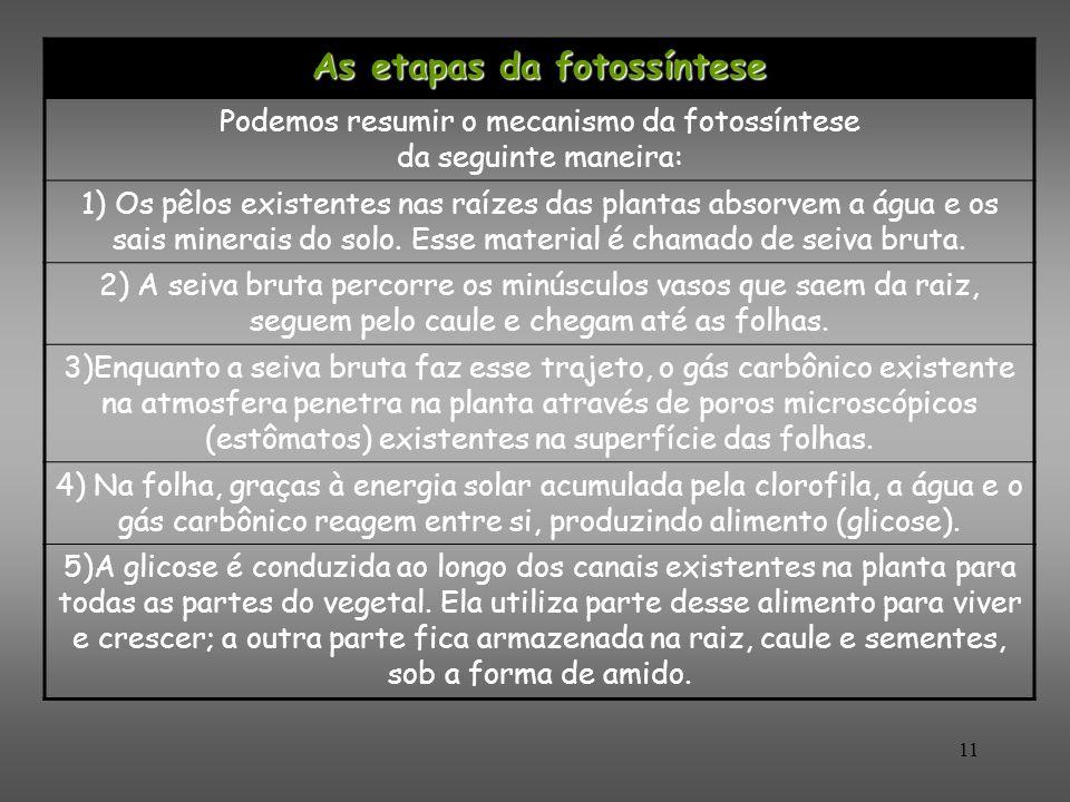 As etapas da fotossíntese