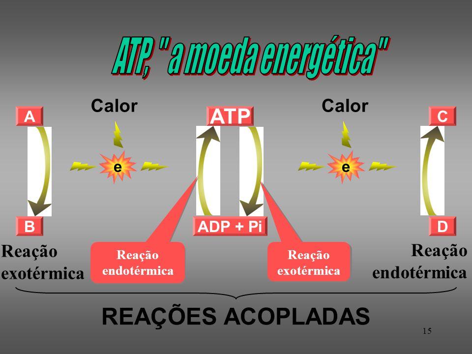 ATP, a moeda energética REAÇÕES ACOPLADAS ATP Calor Calor