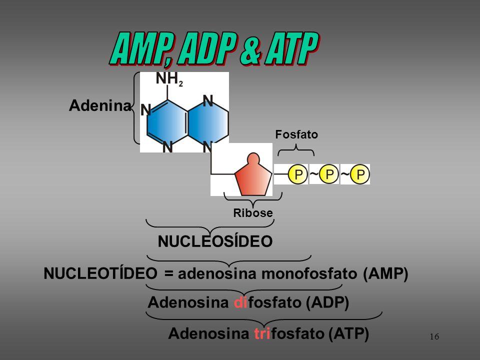 AMP, ADP & ATP Adenina NUCLEOSÍDEO