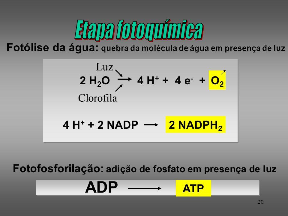 Etapa fotoquímicaFotólise da água: quebra da molécula de água em presença de luz. Luz. O2. 2 H2O. 4 H+ + 4 e- +