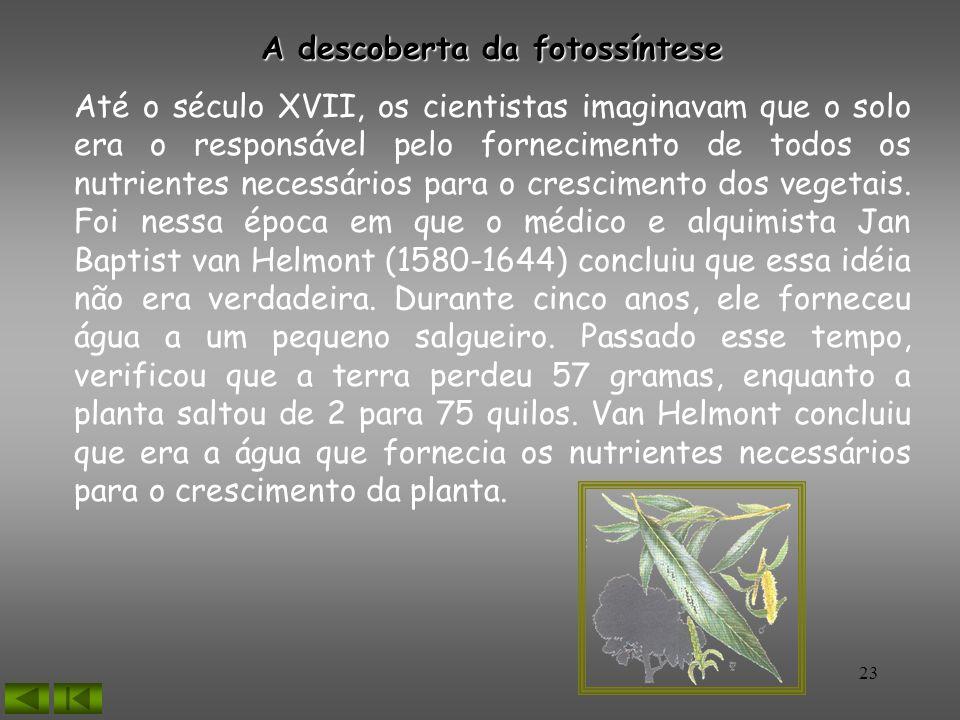 A descoberta da fotossíntese