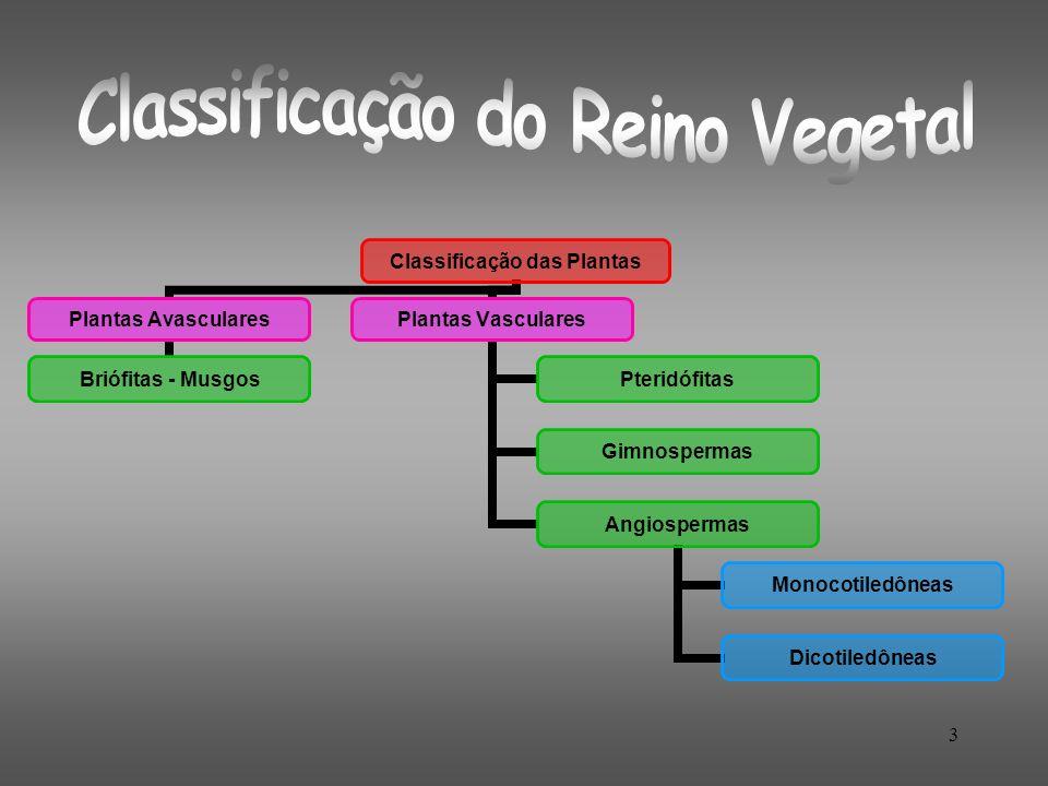 Classificação do Reino Vegetal