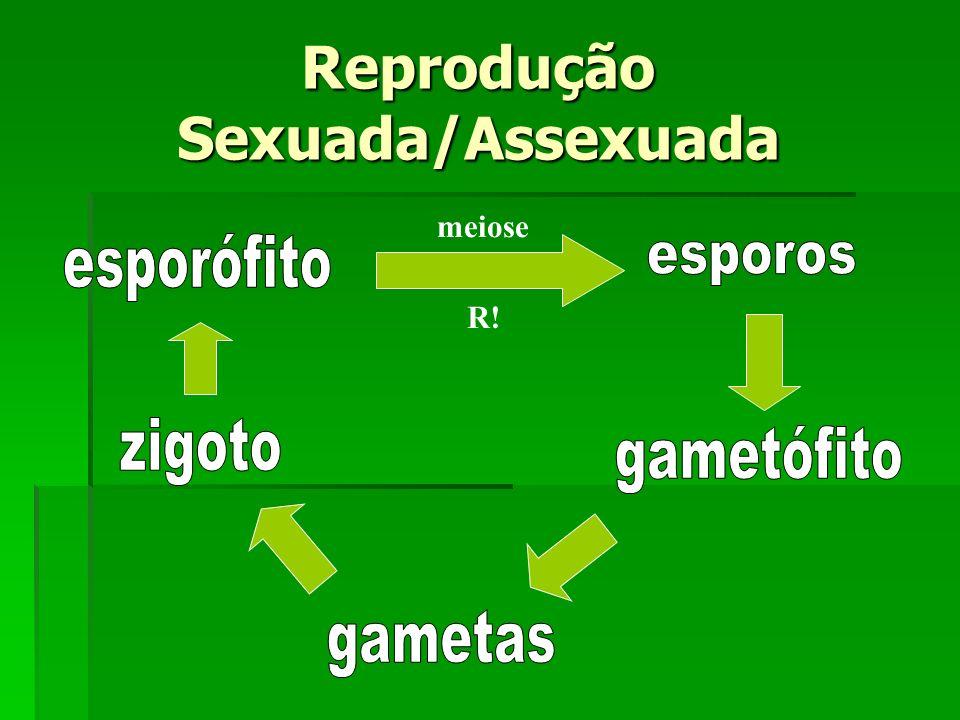 Reprodução Sexuada/Assexuada