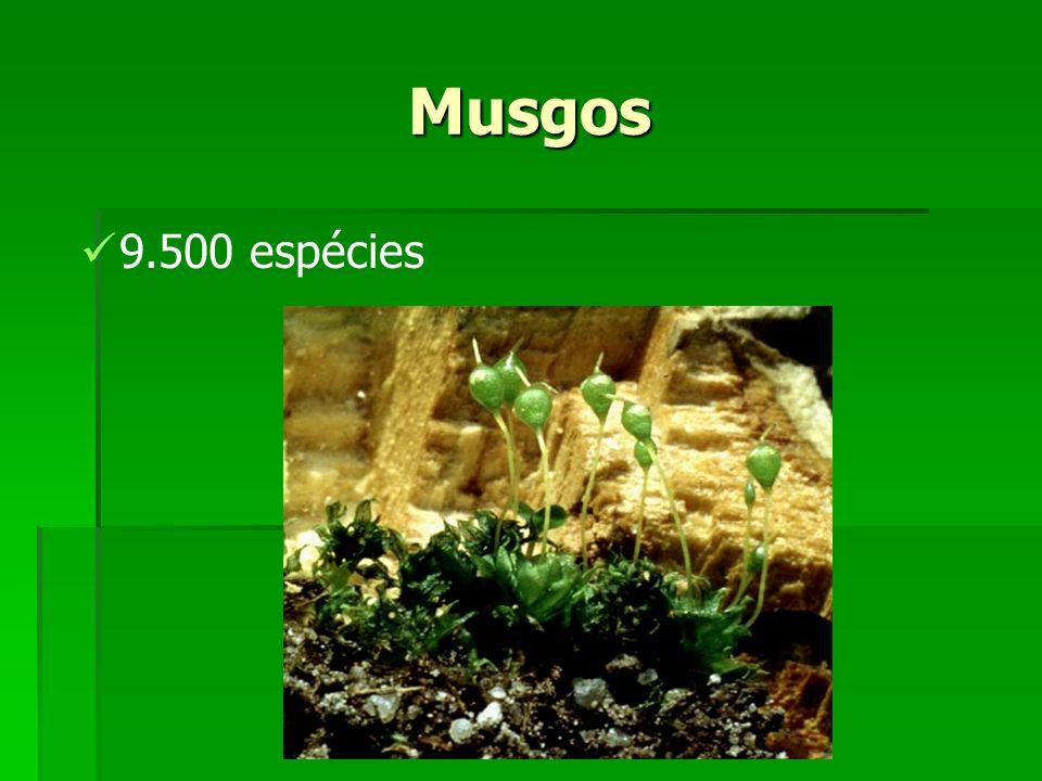 Musgos 9.500 espécies
