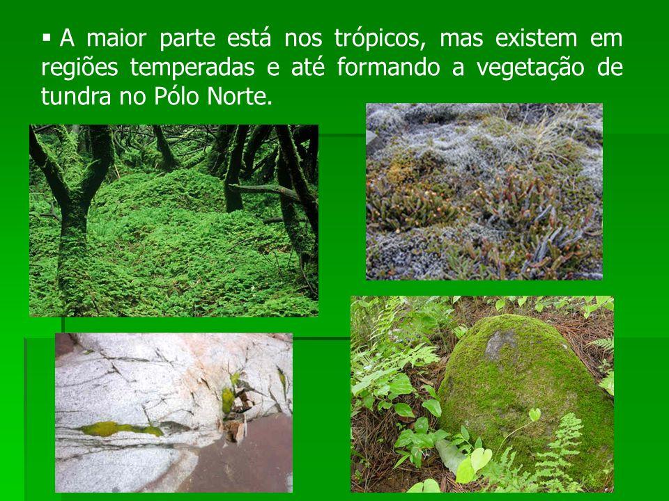 A maior parte está nos trópicos, mas existem em regiões temperadas e até formando a vegetação de tundra no Pólo Norte.