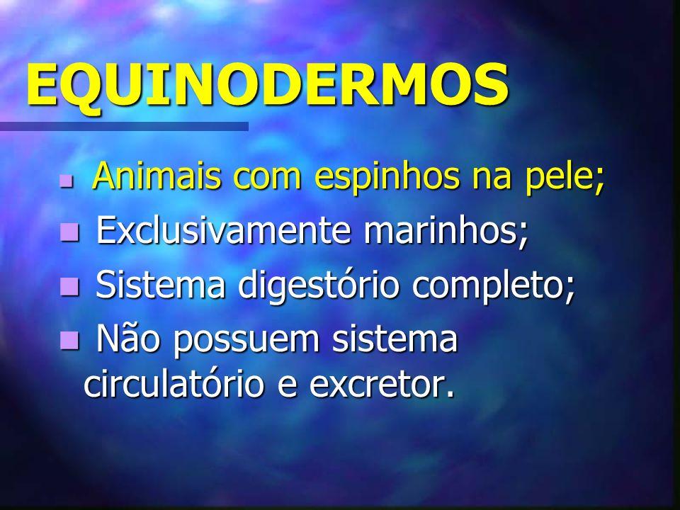 EQUINODERMOS Exclusivamente marinhos; Sistema digestório completo;