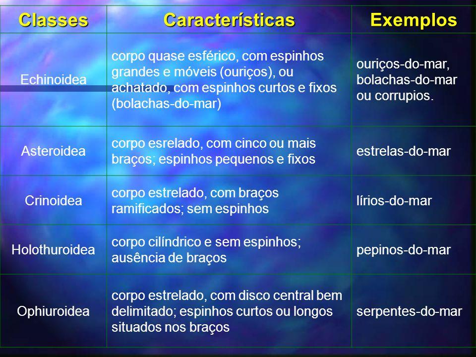 Classes Características Exemplos