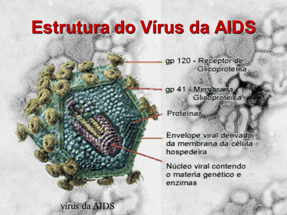 Estrutura do Vírus da AIDS