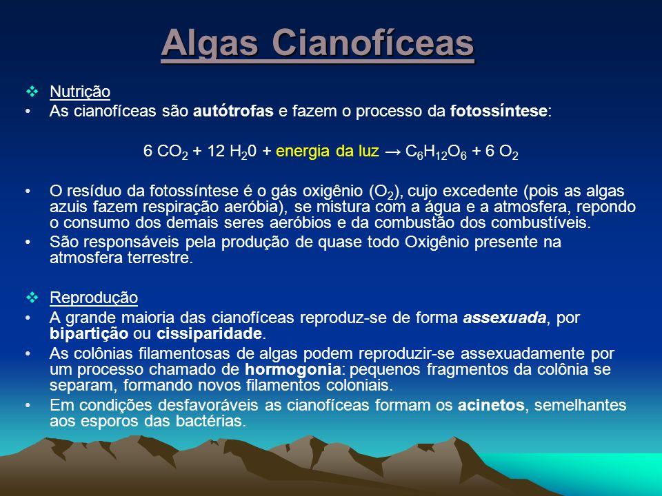 6 CO2 + 12 H20 + energia da luz → C6H12O6 + 6 O2