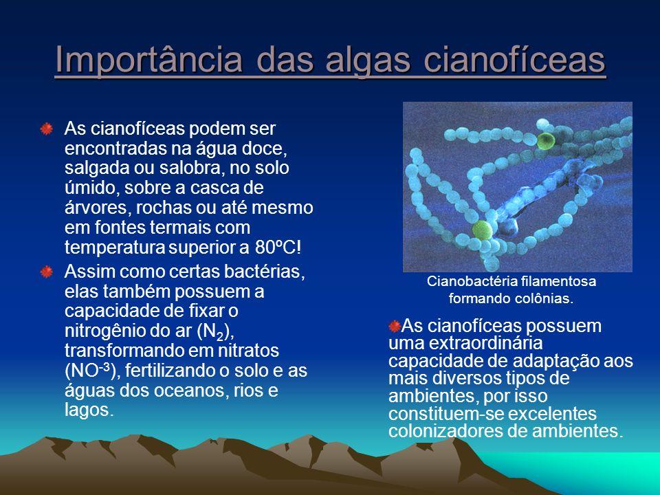 Importância das algas cianofíceas