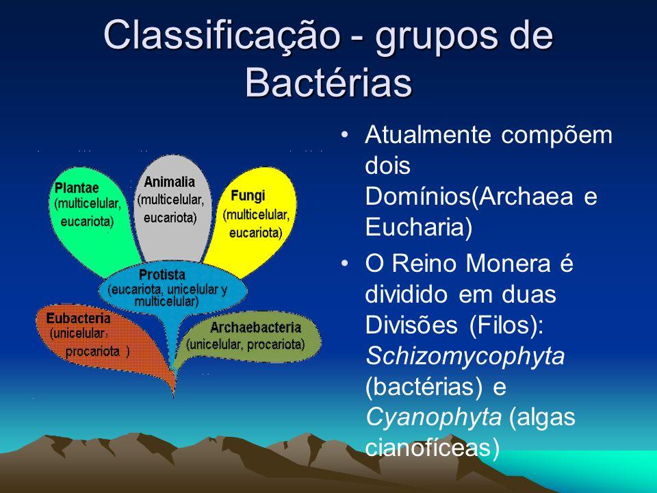 Classificação - grupos de Bactérias
