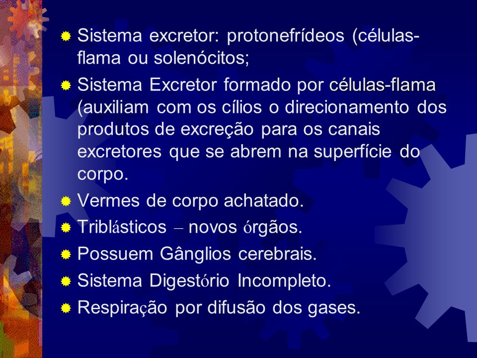 Sistema excretor: protonefrídeos (células-flama ou solenócitos;