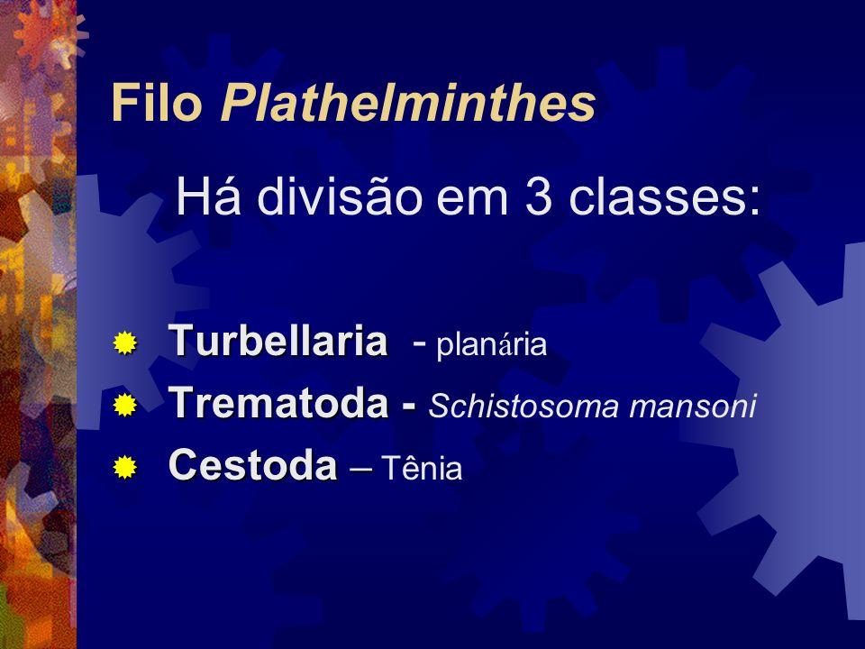 Filo Plathelminthes Há divisão em 3 classes: Turbellaria - planária