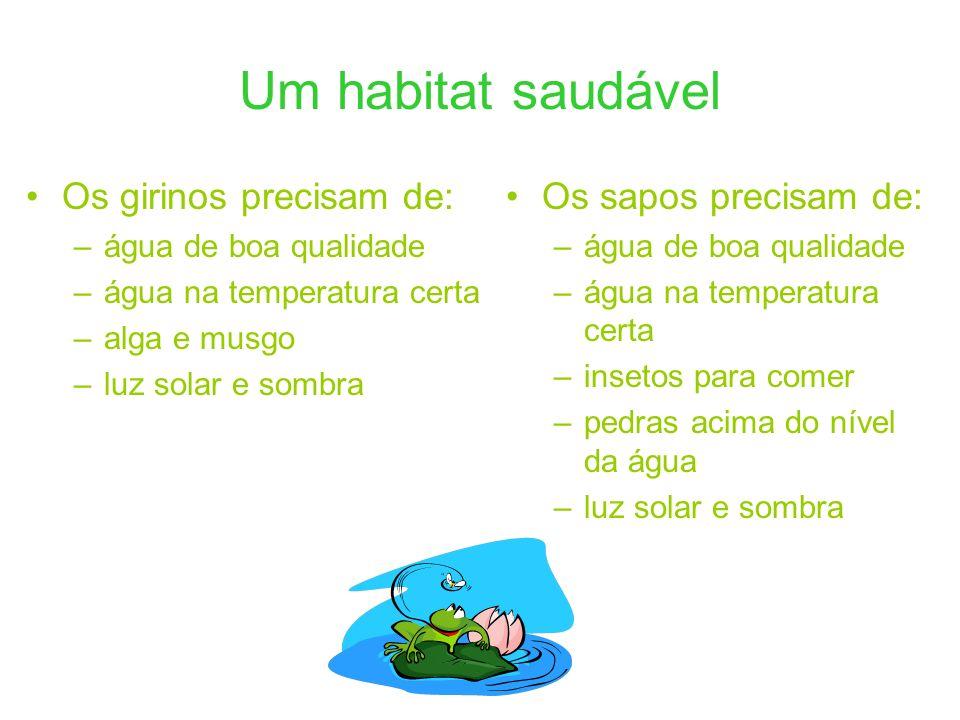 Um habitat saudável Os girinos precisam de: Os sapos precisam de: