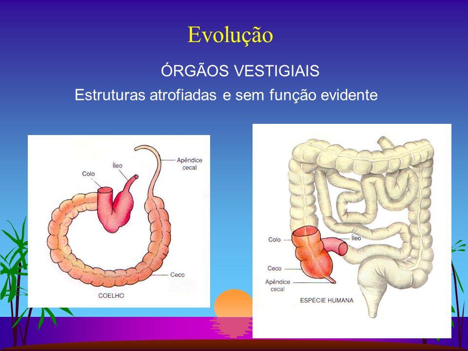 Evolução ÓRGÃOS VESTIGIAIS Estruturas atrofiadas e sem função evidente