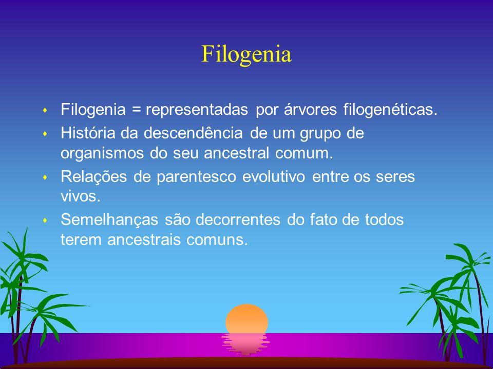 Filogenia Filogenia = representadas por árvores filogenéticas.