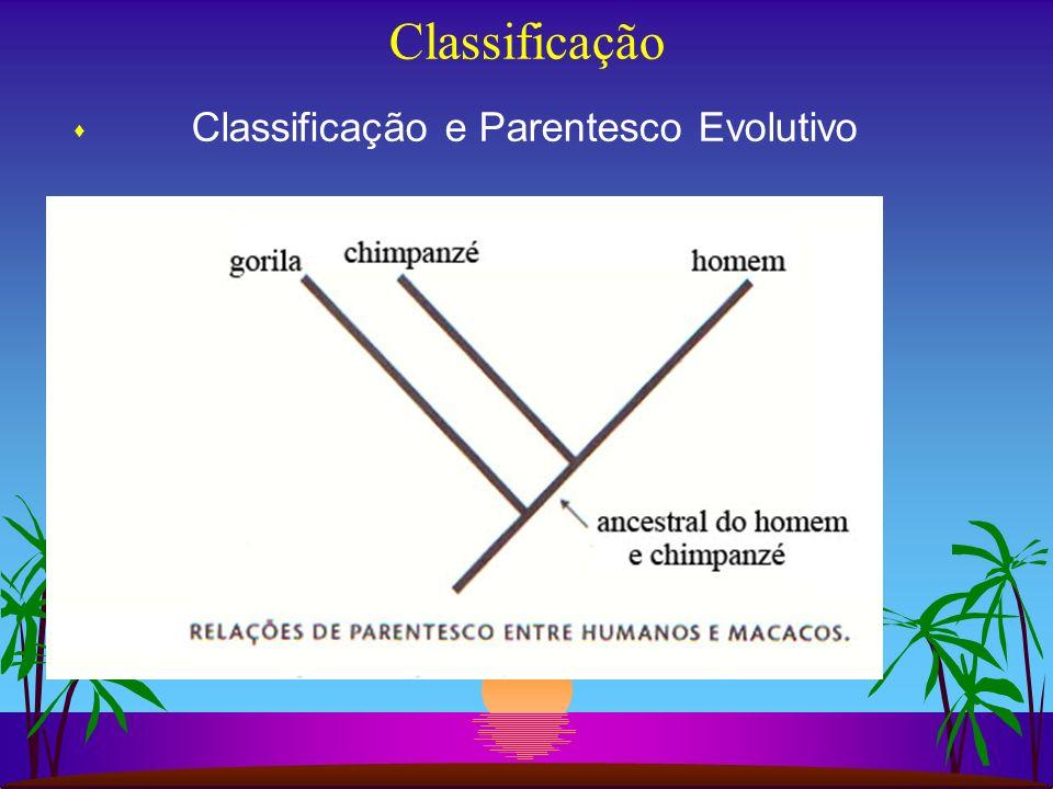 Classificação Classificação e Parentesco Evolutivo