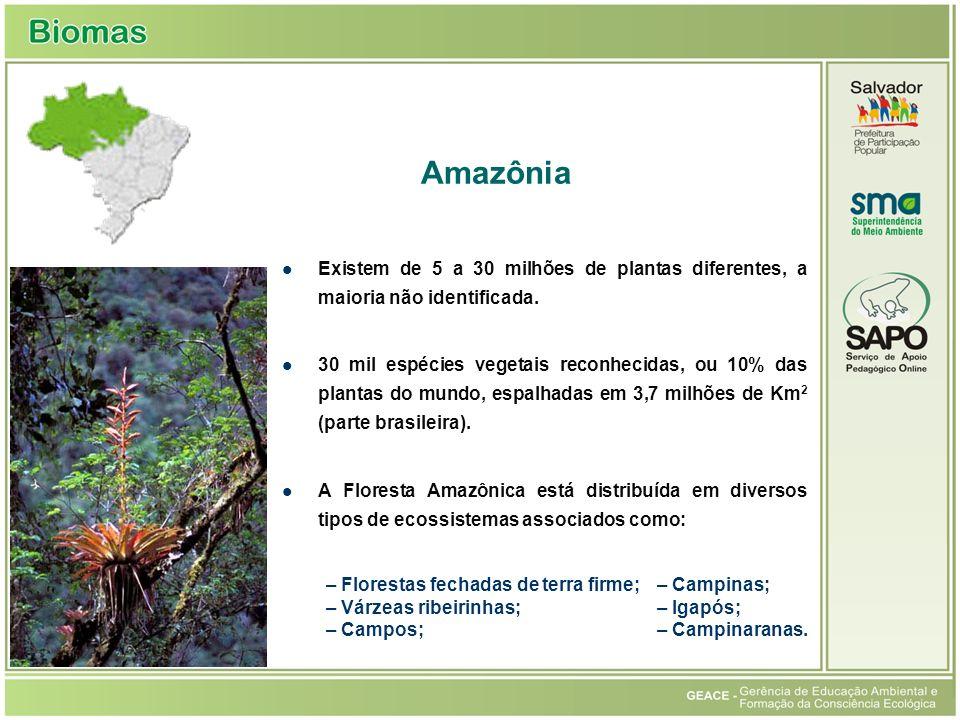 Amazônia Existem de 5 a 30 milhões de plantas diferentes, a maioria não identificada.