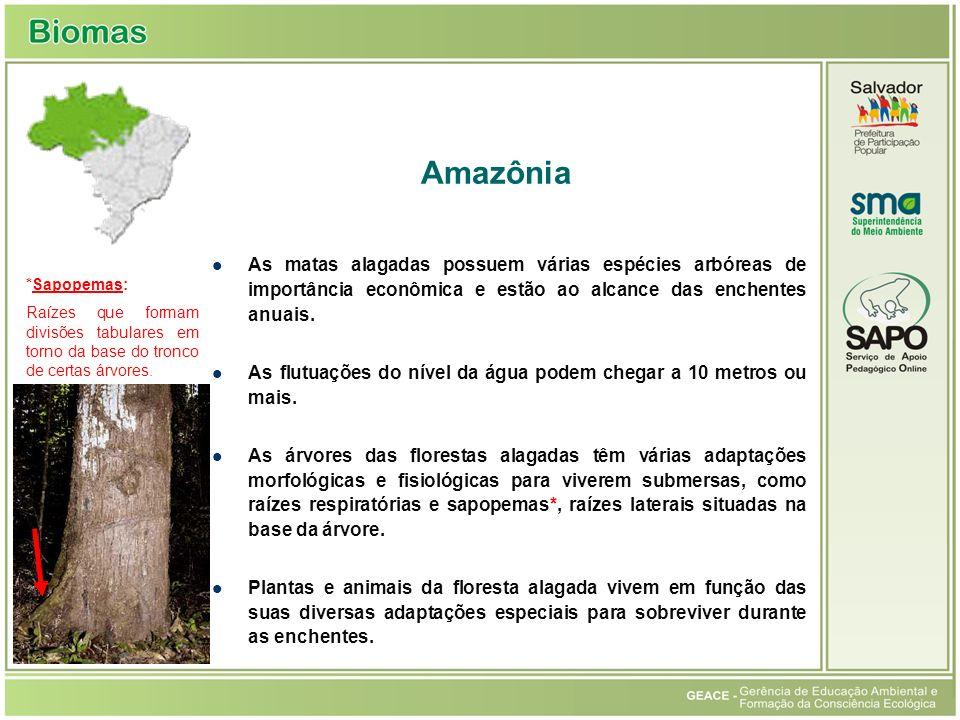Amazônia As matas alagadas possuem várias espécies arbóreas de importância econômica e estão ao alcance das enchentes anuais.