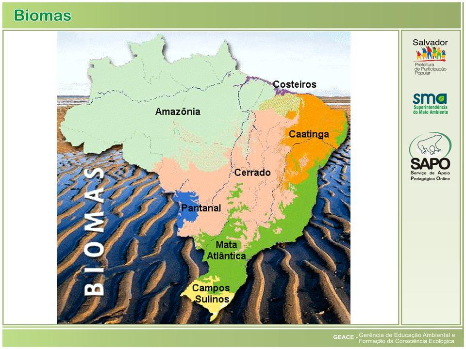 Mapa dos Biomas