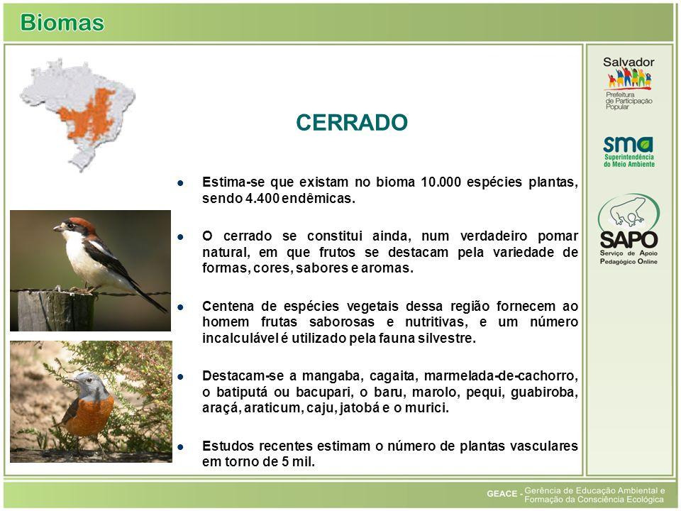 Cerrado CERRADO. Estima-se que existam no bioma 10.000 espécies plantas, sendo 4.400 endêmicas.