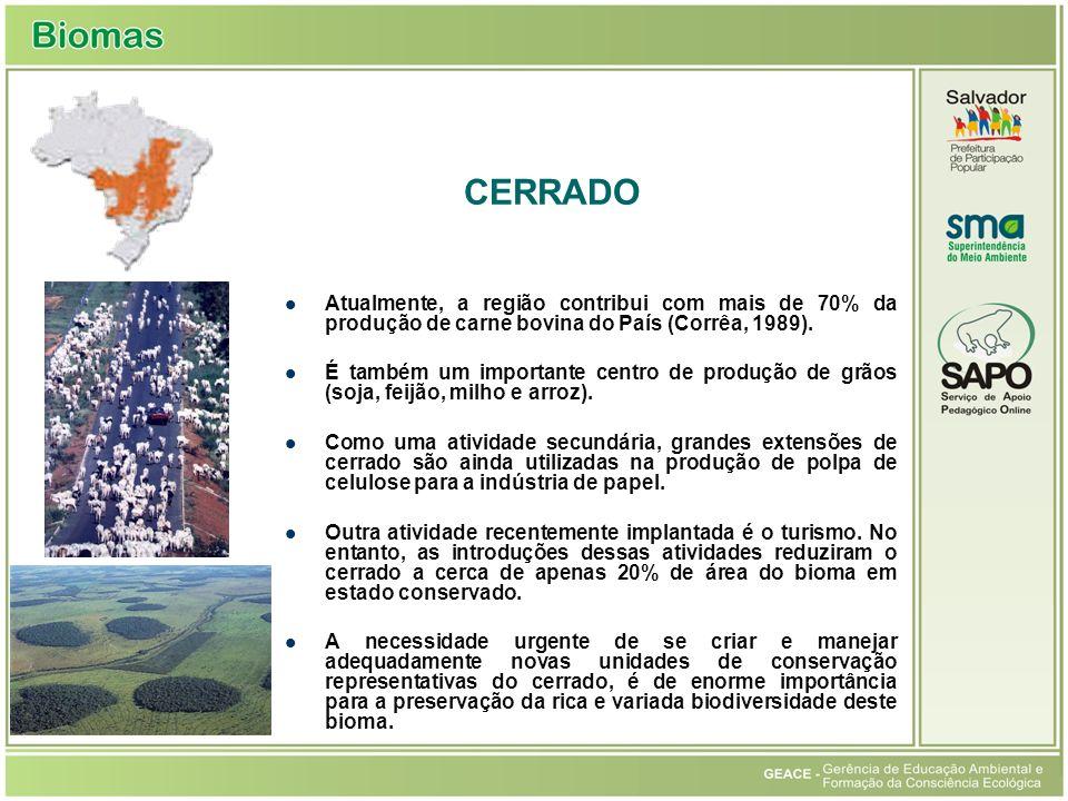 Cerrado CERRADO. Atualmente, a região contribui com mais de 70% da produção de carne bovina do País (Corrêa, 1989).