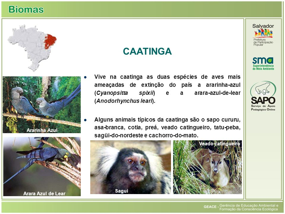 Caatinga CAATINGA.