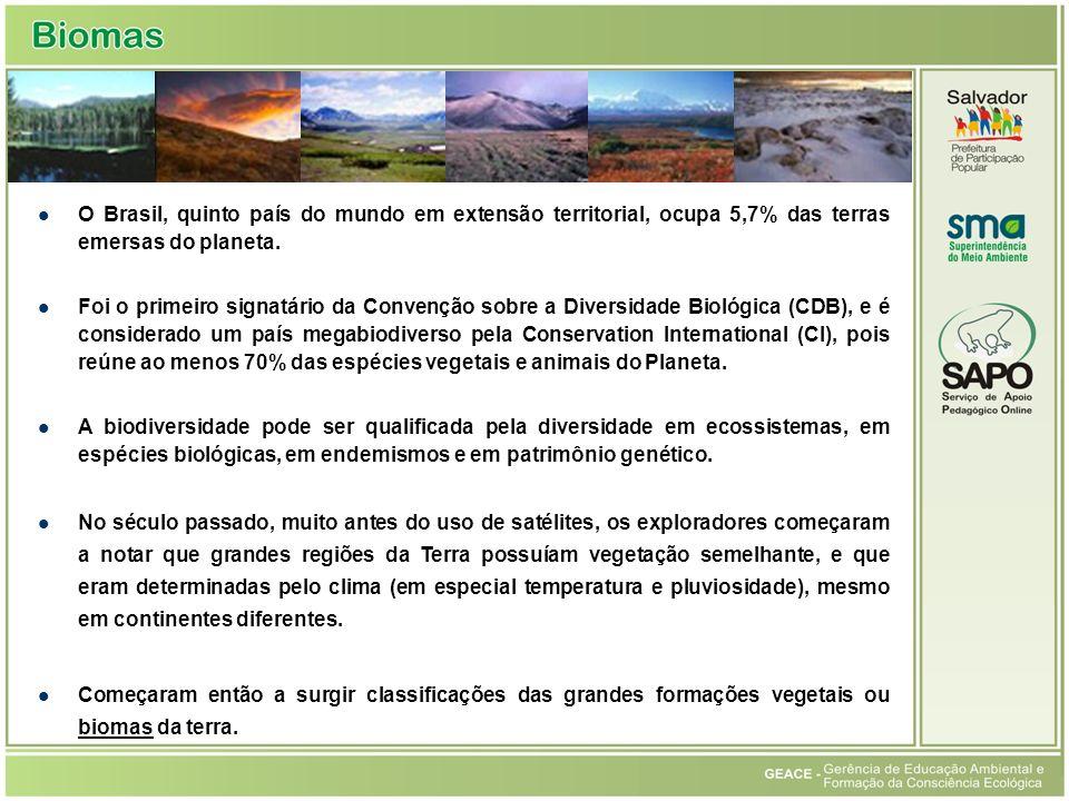 Histórico O Brasil, quinto país do mundo em extensão territorial, ocupa 5,7% das terras emersas do planeta.