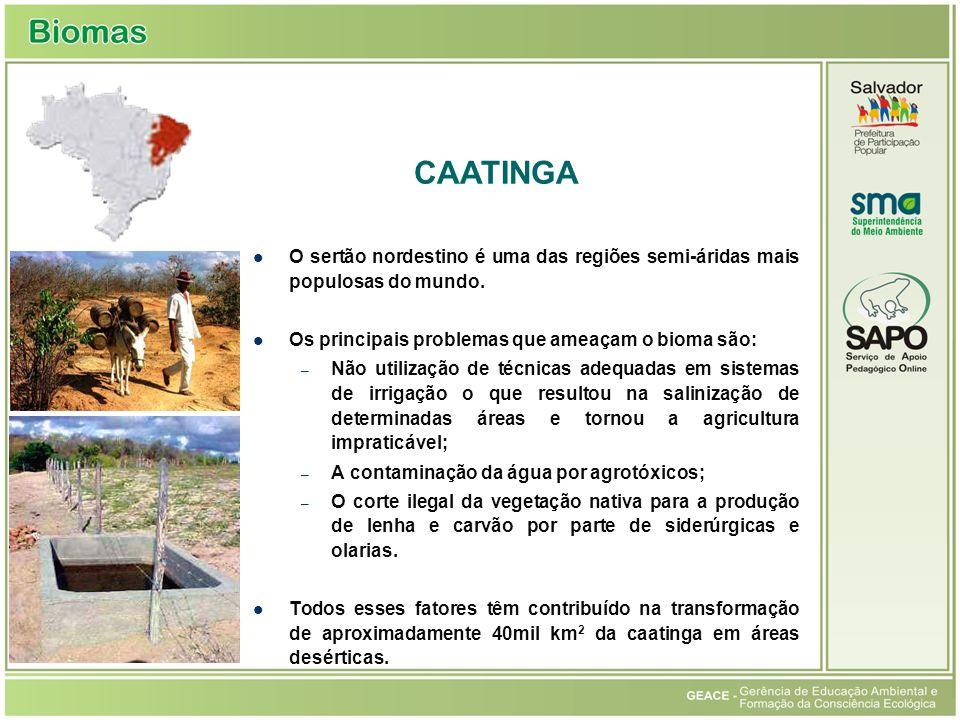 Caatinga CAATINGA. O sertão nordestino é uma das regiões semi-áridas mais populosas do mundo. Os principais problemas que ameaçam o bioma são: