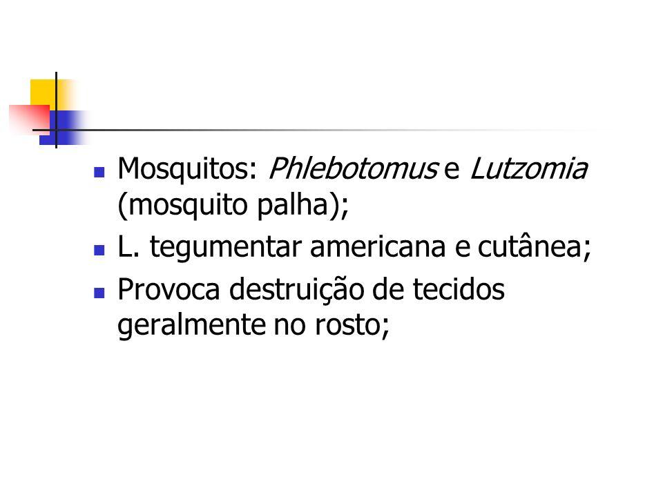 Mosquitos: Phlebotomus e Lutzomia (mosquito palha);