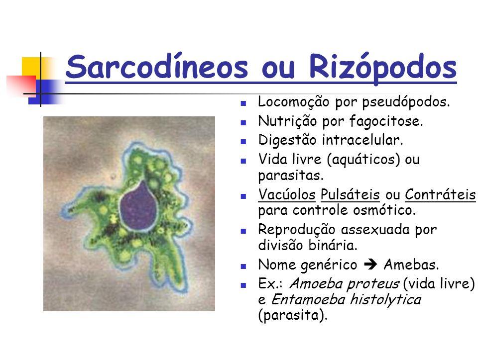 Sarcodíneos ou Rizópodos