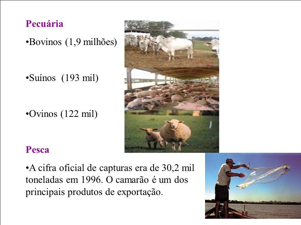 Pecuária Bovinos (1,9 milhões) Suínos (193 mil) Ovinos (122 mil) Pesca.