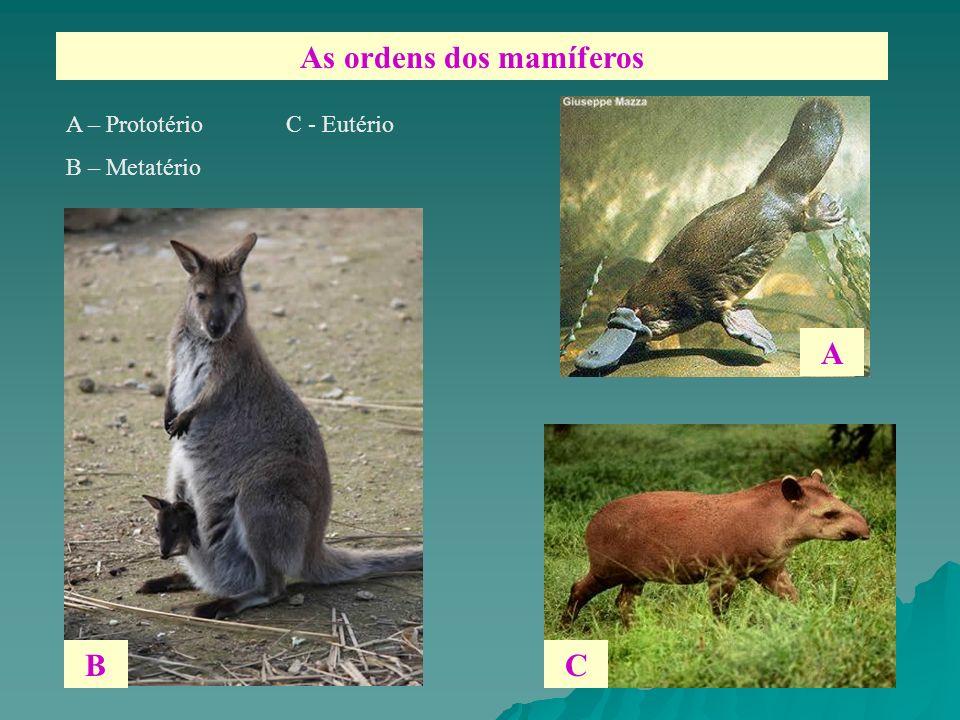 As ordens dos mamíferos