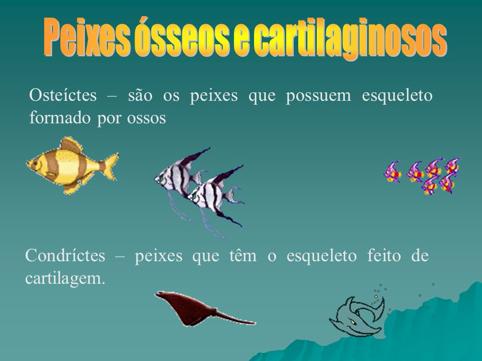 Peixes ósseos e cartilaginosos