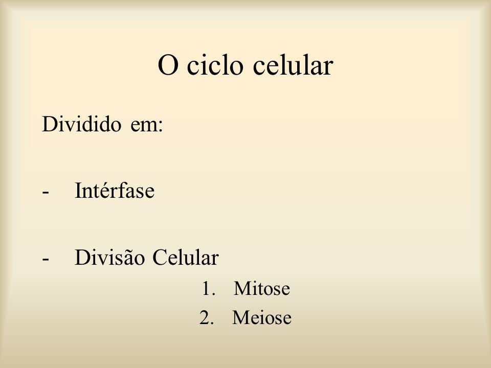O ciclo celular Dividido em: Intérfase Divisão Celular Mitose Meiose