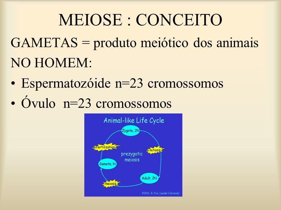 MEIOSE : CONCEITO GAMETAS = produto meiótico dos animais NO HOMEM: