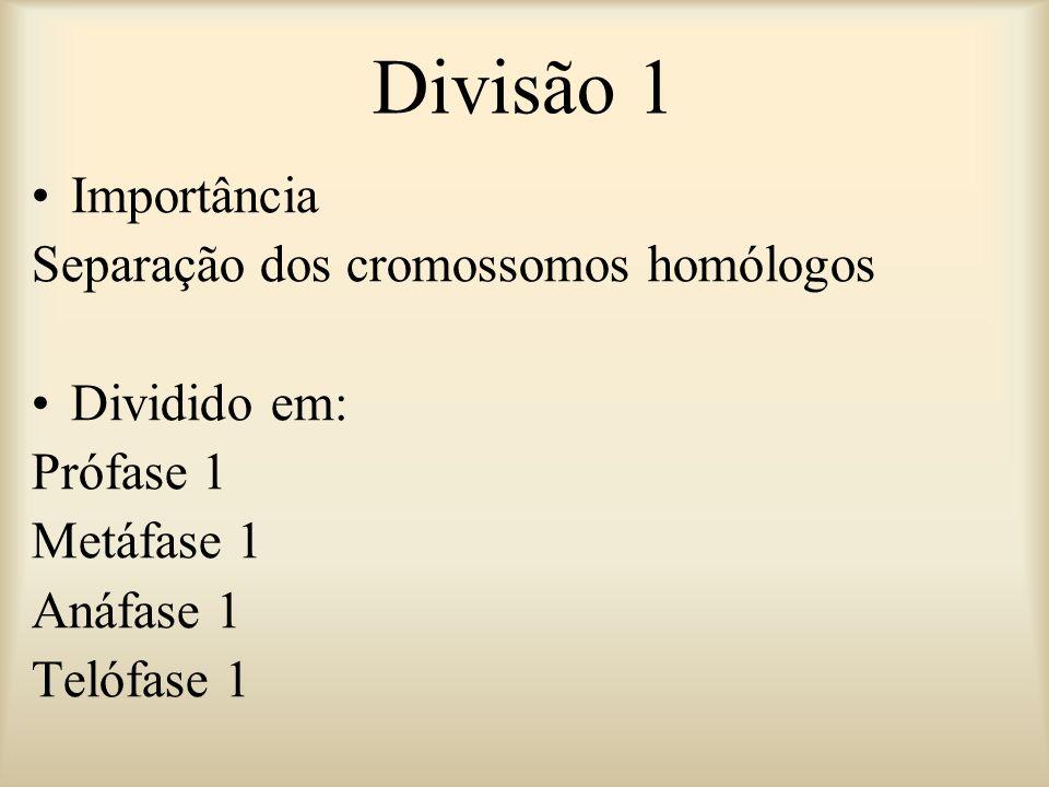 Divisão 1 Importância Separação dos cromossomos homólogos Dividido em: