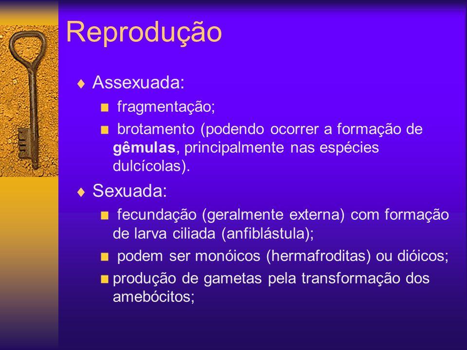 Reprodução Assexuada: Sexuada: fragmentação;