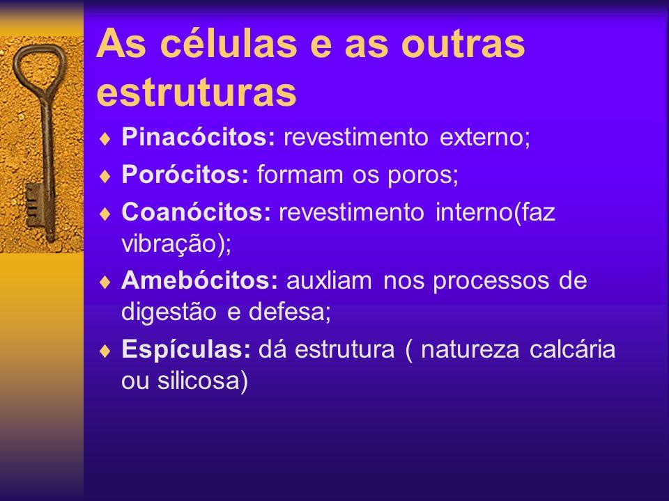 As células e as outras estruturas