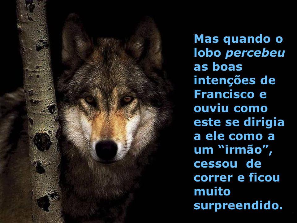 Mas quando o lobo percebeu as boas intenções de Francisco e ouviu como este se dirigia a ele como a um irmão , cessou de correr e ficou muito surpreendido.