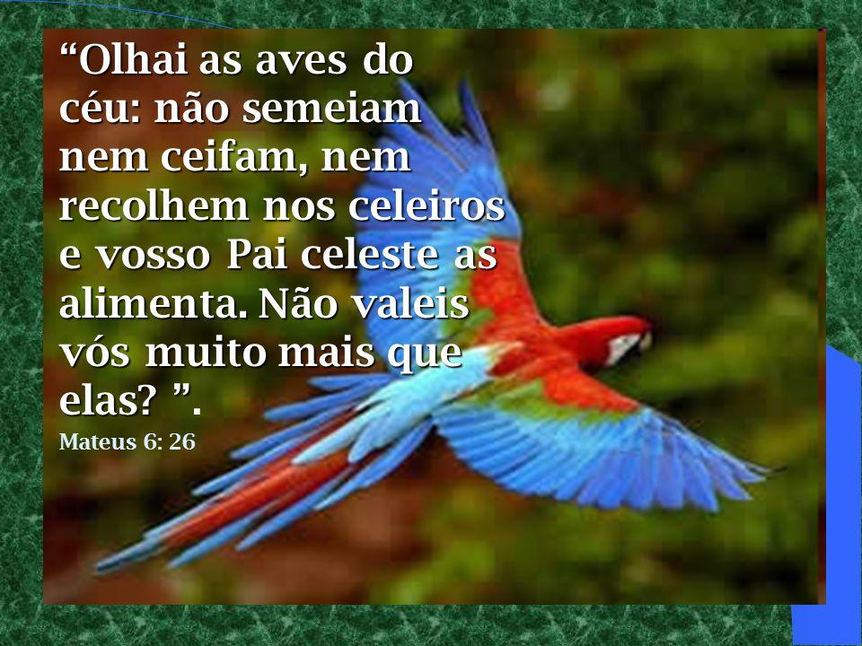 Olhai as aves do céu: não semeiam nem ceifam, nem recolhem nos celeiros e vosso Pai celeste as alimenta. Não valeis vós muito mais que elas .